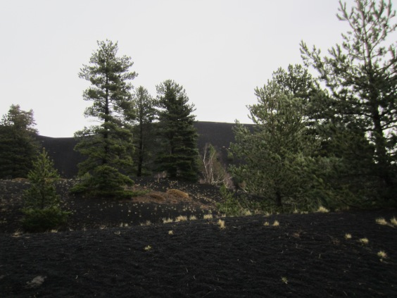 Black lava covered landscape near Mount Etna
