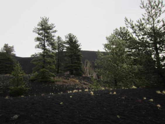 Black lava covered landscape near Mount Etna