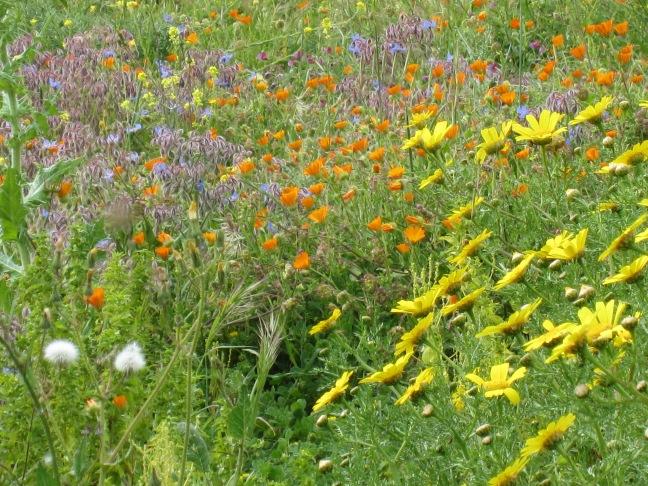Wild Flowers in Segesta, Sicily